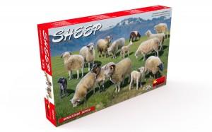 38042 SHEEP + Konstantin Pinaev
